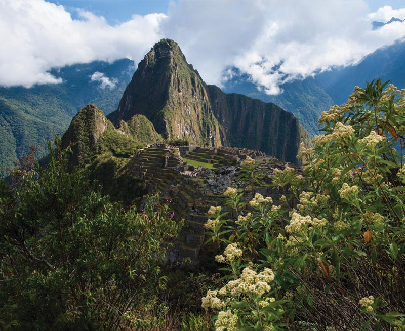 Machu Picchu stone ruins with Huayna Picchu peak under a cloudy sky. White flowery bush in front.